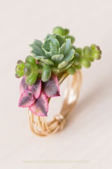 Make a gorgeous ring using living succulents!