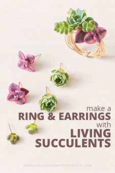 This is amazing! You can use real succulents on earrings and rings!