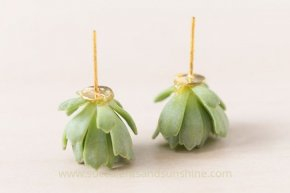 Use floral glue to attach living succulents to earring posts